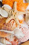 Assorted seashell background shot in high key