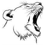 Lioness 2010_02, Lioness Head - Hand Drawn illustration
