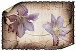 vintage background image with interesting texture and flowers. Isolated on a white background Stock Photo - Royalty-Free, Artist: aelita, Code: 400-04176807