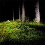 Mossy meadow with fern at night pinewood Stock Photo - Royalty-Free, Artist: naumoid, Code: 400-04179900