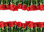Rows of Red Roses Lined Up Along the Image Edge on White Stock Photo - Royalty-Free, Artist: tobkatina, Code: 400-04182328