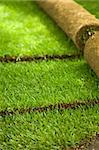 Turf grass rolls partially unrolled revealing a fresh green lawn - shallow depth of field Stock Photo - Royalty-Free, Artist: lightkeeper, Code: 400-04187411
