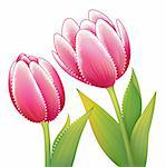illustration drawing of beautiful red tulip flower with leaves