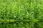 Boreal Forest reflected in river natural background Stock Photo - Royalty-Free, Artist: naumoid, Code: 400-04206317