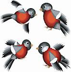 Set of bullfinches Stock Photo - Royalty-Free, Artist: Irins, Code: 400-04207234