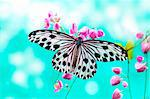 Close up Rice Paper Butterfly on pink flower Stock Photo - Royalty-Free, Artist: szefei, Code: 400-04213618