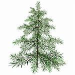 The green Christmas tree. Illustration in vector format EPS. Stock Photo - Royalty-Free, Artist: orensila, Code: 400-04234277