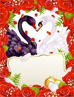 Greeting card with swans in love Stock Photo - Royalty-Freenull, Code: 400-04234387