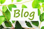 blog concept with word on nature still life Stock Photo - Royalty-Free, Artist: gunnar3000, Code: 400-04237555