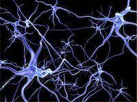 synapse - Neural network, computer artwork Stock Photo - Premium Royalty-Freenull, Code: 679-04249842