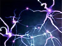 synapse - Neural network, computer artwork Stock Photo - Premium Royalty-Freenull, Code: 679-04249843