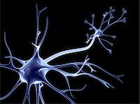 synapse - Nerve cell Stock Photo - Premium Royalty-Freenull, Code: 679-04249847