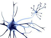 synapse - Nerve cell Stock Photo - Premium Royalty-Freenull, Code: 679-04249849