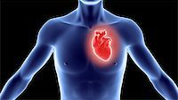 Human body with heart.Great to be used in medicine works and health. Stock Photo - Royalty-Freenull, Code: 400-04255197