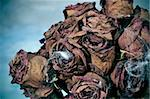 closeup of a dried roses bouquet with spiderweb for Halloween