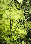 vibrant green background of lush foliage Stock Photo - Royalty-Free, Artist: PinkBadger                    , Code: 400-04258165