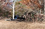 sniper laying on the ground covered in a ghille suite tall grass and trees in the background Stock Photo - Royalty-Free, Artist: snokid                        , Code: 400-04259415