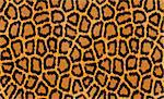 abstract texture of leopard fur Stock Photo - Royalty-Free, Artist: tetkoren                      , Code: 400-04259661
