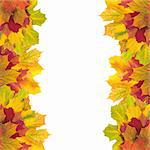 Beautiful autumn maple leaves with copy space for your text Stock Photo - Royalty-Free, Artist: tetkoren                      , Code: 400-04259667