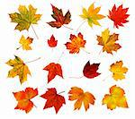 collection beautiful colourful autumn leaves isolated on white background Stock Photo - Royalty-Free, Artist: tetkoren                      , Code: 400-04259676
