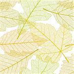 Seamless autumn leaves pattern Stock Photo - Royalty-Free, Artist: denis13                       , Code: 400-04259947
