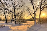 Beautiful winter sunset with trees in the snow Stock Photo - Royalty-Freenull, Code: 400-04261829
