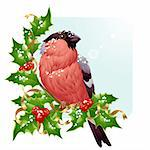 Christmas greeting card. Vector bullfinch and holly Stock Photo - Royalty-Free, Artist: denis13                       , Code: 400-04261832