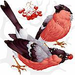 Vector bullfinch and ashberry Stock Photo - Royalty-Free, Artist: denis13                       , Code: 400-04263243