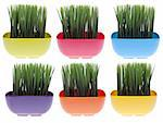 Set of 6 vibrantly colored bowls filled with fresh green grass. Stock Photo - Royalty-Free, Artist: brookebecker                  , Code: 400-04263487