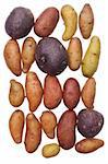 Fingerling Artisan Heritage Potatoes Background Image. Stock Photo - Royalty-Free, Artist: brookebecker                  , Code: 400-04263645