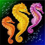 Vector Seahorses Stock Photo - Royalty-Free, Artist: denis13                       , Code: 400-04266138