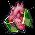 Human Heart with Axes and Green Transparent Arrow around it on Black Background. Vector Illustration (EPS v8.0) Stock Photo - Royalty-Free, Artist: fixer00                       , Code: 400-04266281