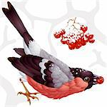 Vector bullfinch and ashberry Stock Photo - Royalty-Free, Artist: denis13                       , Code: 400-04276204