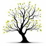 Green vector tree over white background