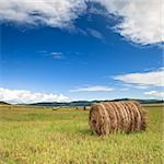 the scene of the meadow Inner Mongolia . Stock Photo - Royalty-Free, Artist: csguy                         , Code: 400-04280120