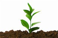 flores - New life concept - green seedling growing out of soil Stock Photo - Royalty-Freenull, Code: 400-04285316