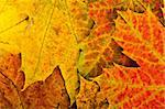 Multi colored fallen autumn leaves background Stock Photo - Royalty-Free, Artist: valeev                        , Code: 400-04288099