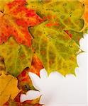 Multi colored fallen autumn leaves as border Stock Photo - Royalty-Free, Artist: valeev                        , Code: 400-04288100