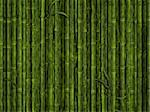 illustration of the green bamboo forest background Stock Photo - Royalty-Free, Artist: SNR                           , Code: 400-04291226