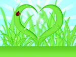 Heart Shape Grass with Water Dew Drops Illustration