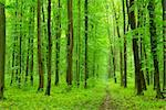 a path is in the green forest Stock Photo - Royalty-Free, Artist: Pakhnyushchyy                 , Code: 400-04301740
