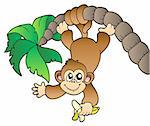 Monkey hanging on palm tree - vector illustration. Stock Photo - Royalty-Free, Artist: clairev                       , Code: 400-04302426