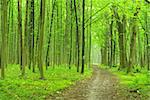 a path is in the green forest Stock Photo - Royalty-Free, Artist: Pakhnyushchyy                 , Code: 400-04311084