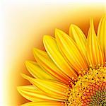 Background with half of the  yellow sunflower. Mesh. Clipping Mask Stock Photo - Royalty-Free, Artist: Lep                           , Code: 400-04321083