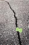 Green plant growing trough cracked ground Stock Photo - Royalty-Free, Artist: donatas1205                   , Code: 400-04322963