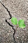 Green plant growing trough cracked ground Stock Photo - Royalty-Free, Artist: donatas1205                   , Code: 400-04322964