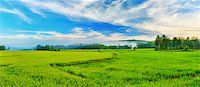 philippine terrace farming - Panorama of the paddy rice field. Philippines Stock Photo - Royalty-Freenull, Code: 400-04339278