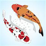 Carp. Koi Fish Vector greeting card Stock Photo - Royalty-Free, Artist: alinamay                      , Code: 400-04340364