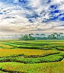 Panorama of the paddy rice field. Philippines Stock Photo - Royalty-Free, Artist: GoodOlga                      , Code: 400-04341041