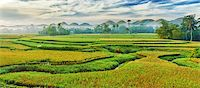 philippine terrace farming - Panorama of the paddy rice field. Philippines Stock Photo - Royalty-Freenull, Code: 400-04344688
